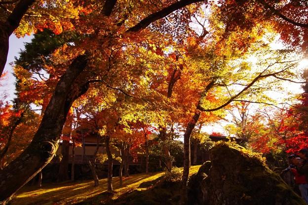 今宵は箱根でAirbnbブログ更新中♪芸術の秋を味わってます!