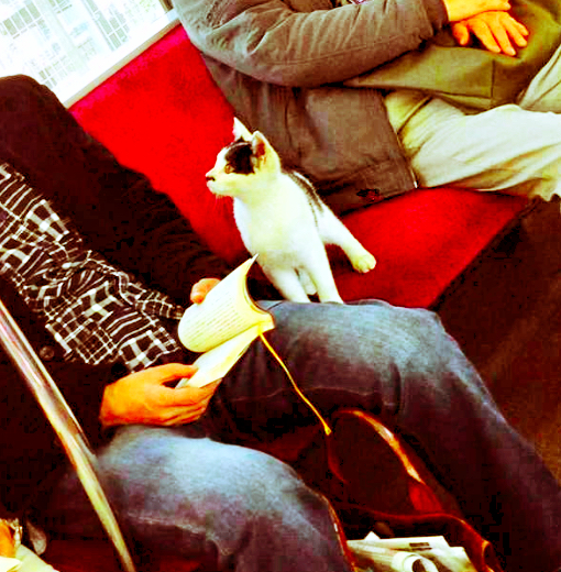 cat-in-train