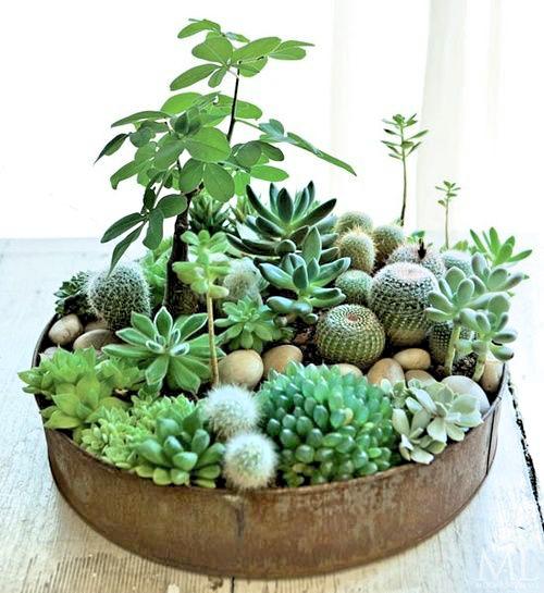 foliage-plant