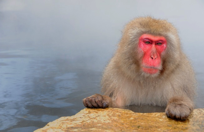 hot-spring.mokey