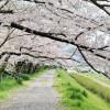 カメラ片手に京都を奔走!Airbnbブログで撮れ高報告会♪