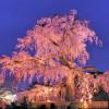 Airbnbブログで大公開!京都旅、撮れ高報告会の後半戦♪