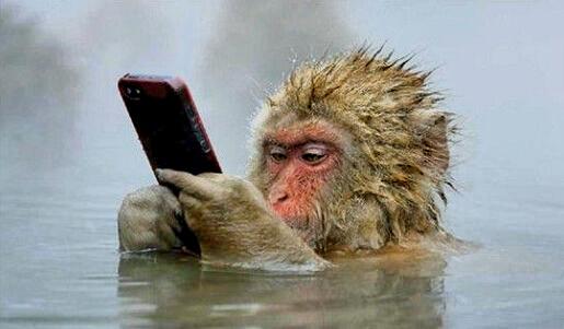 monkey.onsen