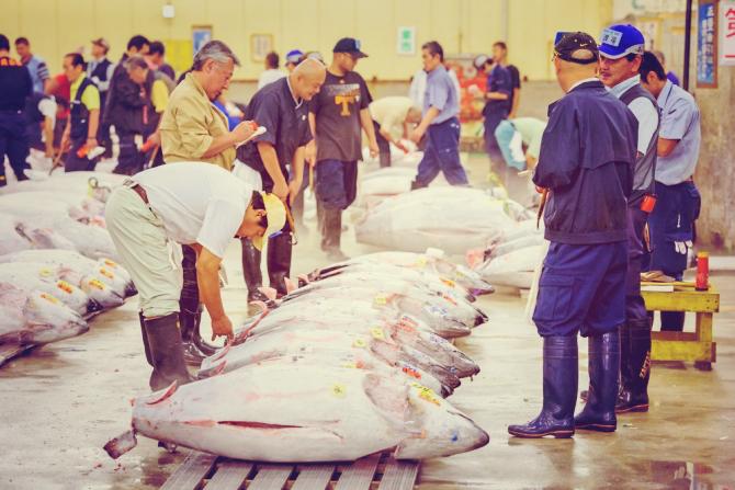 tsukiji.fish-market