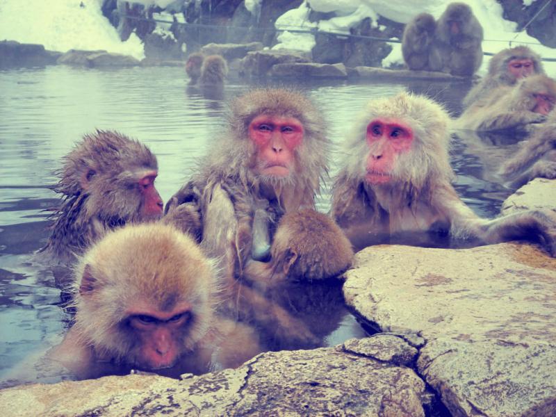zigokutanionsen.monkey