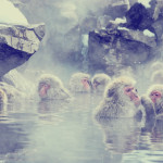 Airbnbゲストにも人気な長野!地獄谷温泉をゆらり旅♪