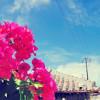 更なる外国人ゲスト獲得へ!沖縄の今をAirbnbブログで紹介♪