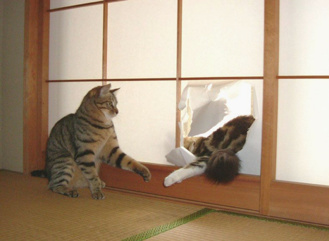 tatami-cat